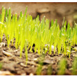 Green grass with earth — Stock Photo #9678925