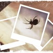 Polaroid collage of spider — Stock Photo