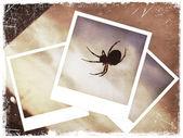 Polaroid kolaż pająk — Zdjęcie stockowe