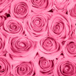 Pink roses — Stock Photo #8123021