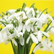 Snowdrops — Stock Photo #8420480