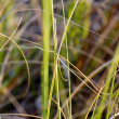 Long Beach Grass Closeup — Stock Photo #8000006