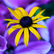Yellow Caribbean Flower before Purple Petals — Stock Photo