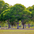 Florida Everglades Trees — Stock Photo