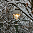 Lit Street Light among Snowy Branches in Winter - Stock Photo