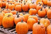 Pumpkins Farmers Market — Stock Photo