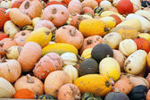 Dynie, melony, rosliny basztanowe krajobraz — Zdjęcie stockowe
