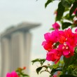 Red flower in marina bay sands — Foto de Stock