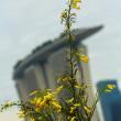 Yellow flower in marina bay sands — Foto de Stock