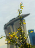 Yellow flower in marina bay sands — Stock Photo