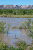 Colorado River at Flood Stage — Stock Photo