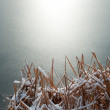 Stock Photo: Frozen Pond Winter Background