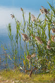 Lake Shore Grasses — Stock Photo