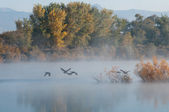 Foggy Morning at Red Rocks Lake — Stock Photo