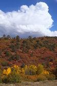Colorful Gambel Oak Brush in Autumn — Stock Photo