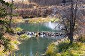 Beaver Dam near Mesa Lakes — Stock Photo
