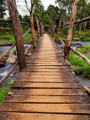 Bridge to the jungle — Stock Photo