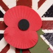 Remembrance day poppy - Stock Photo