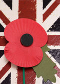 Remembrance day poppy — Stock Photo