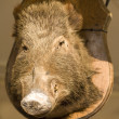 Stock Photo: Wild boars head