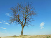 Bare tree isolated on the Hill — Stock Photo