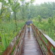 Child walks under the umbrella in a wooden walkway — 图库照片