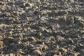 Geploegd veld met bosjes van aarde — Stockfoto