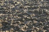Plowed field with clumps of earth — Stock Photo