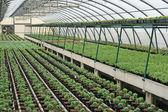 植物の成長のための温室の内部 — ストック写真