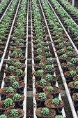 花の成長のための温室の内部 — ストック写真