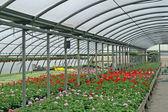 Inredning av ett växthus för odling av blommor — Stockfoto
