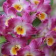Stock Photo: Orchid just blossomed photographed up close