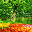 Keukenhof Park - Garden — Stock Photo