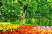 Keukenhof Park - Garden — Stock Photo