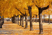 Urban golden leafs arch and carpet — Stock Photo