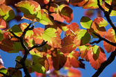Beautiful fall colors — Stock Photo