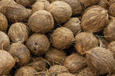 Coconuts raw background — Stock Photo