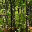 Flood forest - Stock Photo
