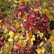 Multicolored  fall leafs mix together - Stock Photo