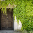 Closed door and green vines — Stock Photo