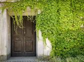 Closed door and green vines — Stock Photo