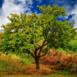 Stock Photo: Green spring tree