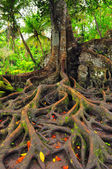 Forest tree with roots and leaves — Stock Photo