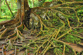 Forest tree with roots — Stock Photo