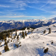 Austrian Alps ski slope with trees — Stock Photo