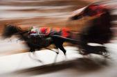 Running donkey carriage panning — Stock Photo