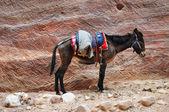 Burro e cachorro em fundo de pedra — Foto Stock