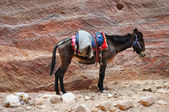 Burro y perro sobre fondo de roca — Foto de Stock