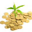 Coins and plant, isolated on white background - Stock Photo