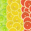 Abstract background of citrus slices. Closeup. Studio photograph - Stock Photo